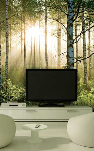 1 Wall / XXL Wall Mural / SUMMER FOREST