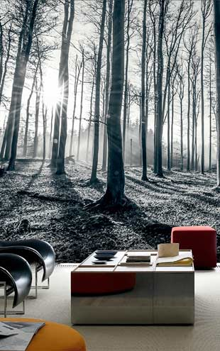 1 Wall / XXL Wall Mural / BLACK & WHITE FOREST
