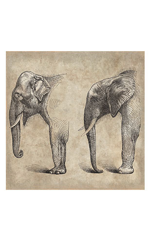 【WALL ART】 ALFONZ / 2/8 SAVANE ALF00566DC (Elephant)