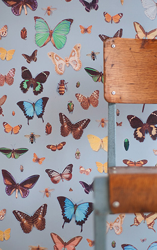 Ella Doran / Bugs and Butterflies