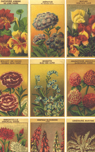 Ian Sanderson SEED PACKETS REGIMENTAIRE Vintage