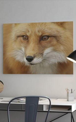 【Canvas Print】PHOTOWALL / Red Fox (e19131)
