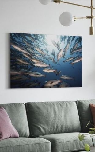 【Canvas Print】PHOTOWALL / Mangrove Snappers (e19233)