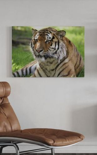 【Canvas Print】PHOTOWALL / Tiger (e6306)