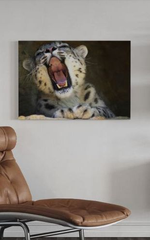 【Canvas Print】PHOTOWALL / Tired Cat (e6311)