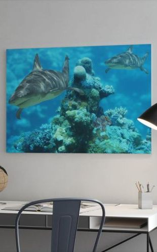 【Canvas Print】PHOTOWALL / Shark Bommie (e6315)