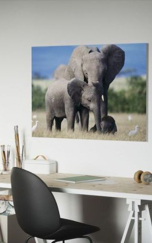 【Canvas Print】PHOTOWALL / Elephant Family (e6390)
