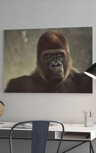 【Canvas Print】PHOTOWALL / Mighty Gorilla (e6393)