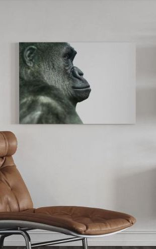 【Canvas Print】PHOTOWALL / Gorilla (e9008)
