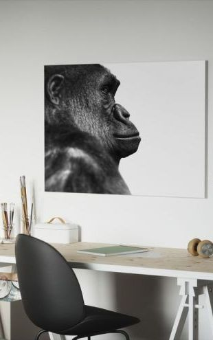 【Canvas Print】PHOTOWALL / Gorilla - b/w (e9034)