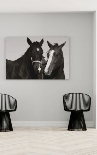 【Canvas Print】PHOTOWALL / Two Thoroughbreds (e1493)