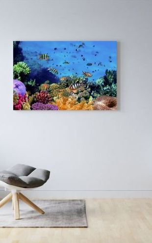 【Canvas Print】PHOTOWALL / Coral Reef at Koh Cahg Island (e20416)