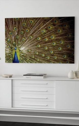 【Canvas Print】PHOTOWALL / Proud as a Peacock (e23406)