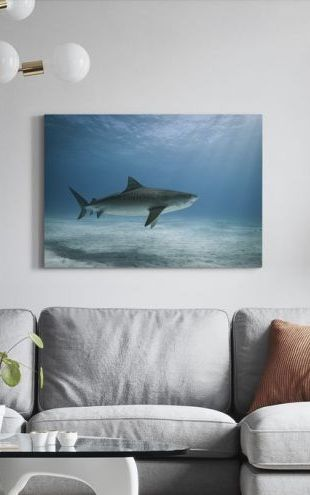 【Canvas Print】PHOTOWALL / Tiger Shark (e24631)