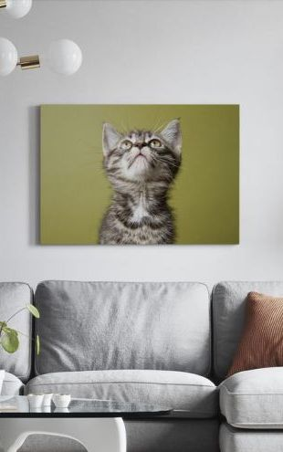 【Canvas Print】PHOTOWALL / Wondering Kitten (e24635)