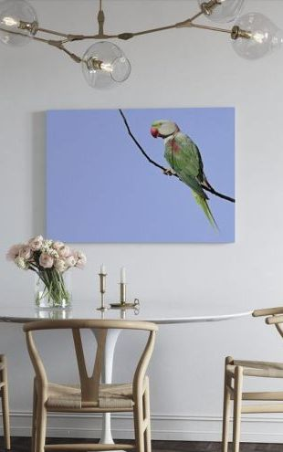 【Canvas Print】PHOTOWALL / Alexandrine Parakeet (e24642)