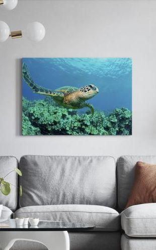 【Canvas Print】PHOTOWALL / Sea Turtle in Coral (e24724)