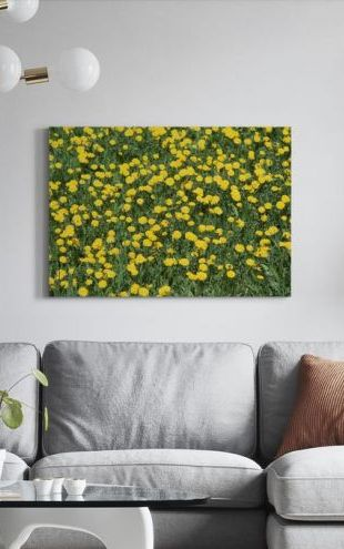 【Canvas Print】PHOTOWALL / Dandelion and Grass (e24902)
