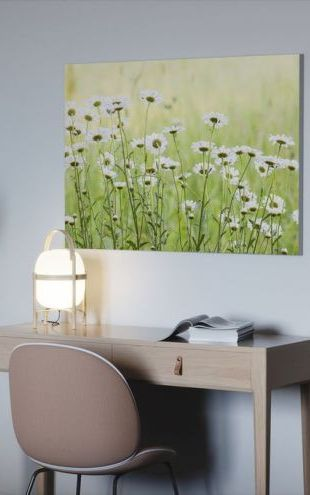 【Canvas Print】PHOTOWALL / Daisies (e25142)