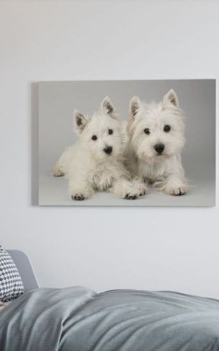 【Canvas Print】PHOTOWALL / Two Westies (e312539)