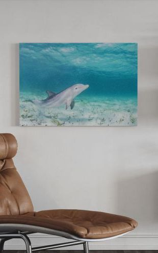 【Canvas Print】PHOTOWALL / Bottlenose Dolphin Playing (e319036)