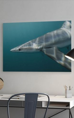 【Canvas Print】PHOTOWALL / Blue Shark off Halifax (e319038)