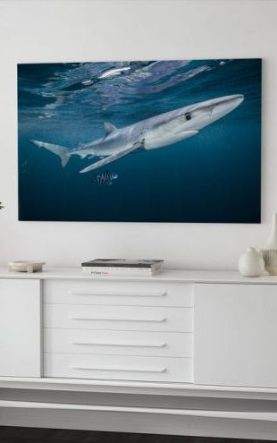 【Canvas Print】PHOTOWALL / Blue Shark with a Pair of Pilot Fish (e319039)