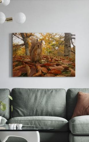 【Canvas Print】PHOTOWALL / Red Squirrel in Leaf Litter (e320140)