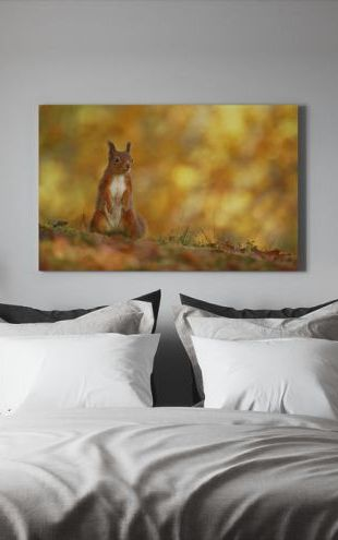 【Canvas Print】PHOTOWALL / Red Squirrel on Forest Floor (e320143)