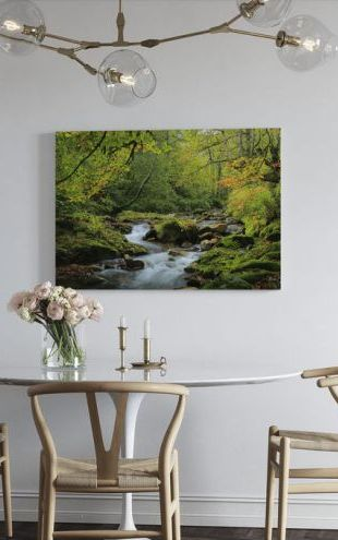 【Canvas Print】PHOTOWALL / River and Beech Woodland (e320145)