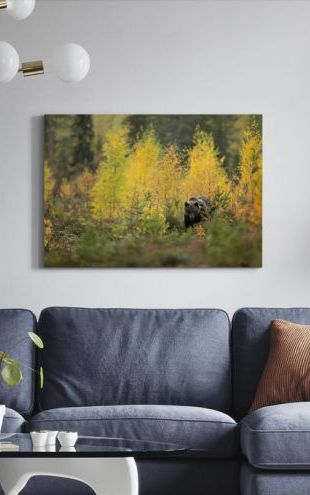 【Canvas Print】PHOTOWALL / Brown Bear in Autumn Forest (e320146)