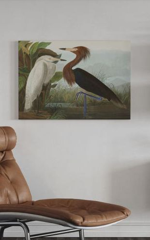 【Canvas Print】PHOTOWALL / Purple Heron (e321445)