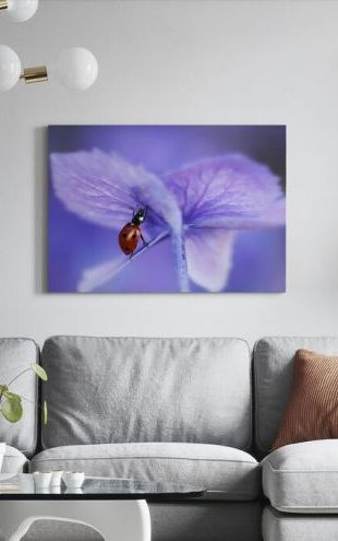 【Canvas Print】PHOTOWALL / Ladybird on Purple Hydrangea (e323649)