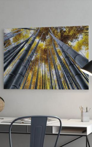【Canvas Print】PHOTOWALL / Japan Rising Sun - Bamboo Forest Kyoto (e328658)
