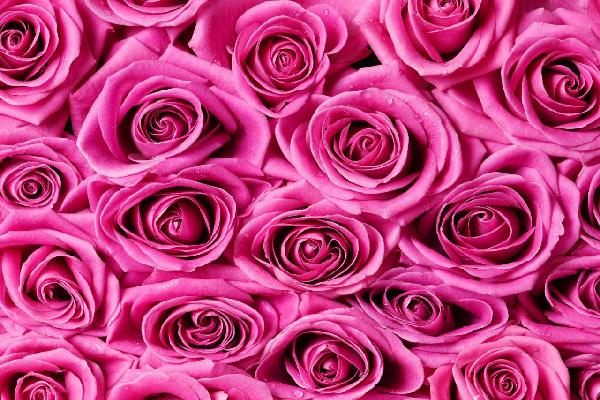 PHOTOWALL / Roses - Pink (e19095)