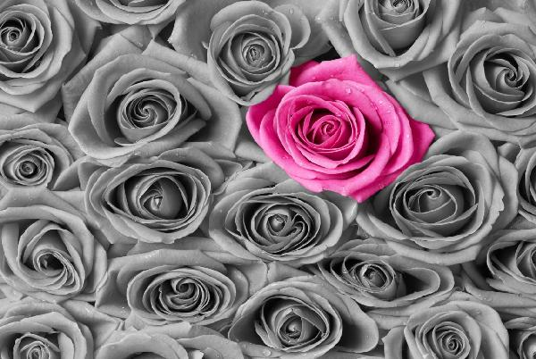 PHOTOWALL / Roses - Pink and Grey (e19096)