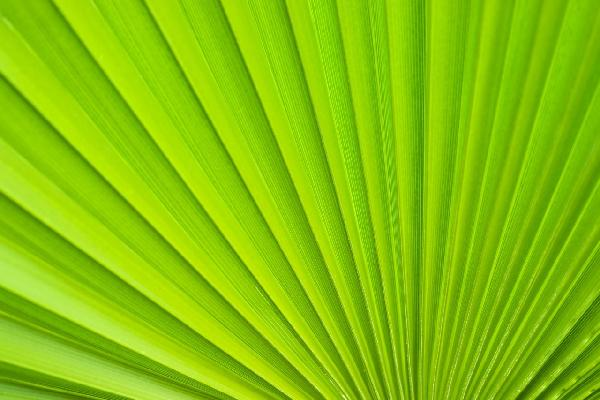 PHOTOWALL / Palm Leaf Detail (e19138)