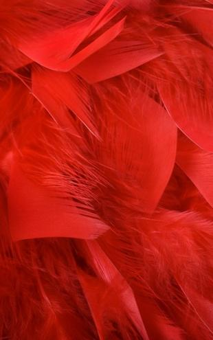 PHOTOWALL / Red Feathers (e19178)