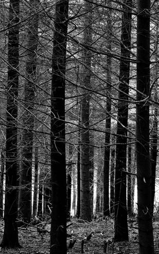 PHOTOWALL / Blue Forest - b/w (e6274)
