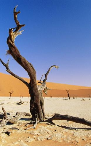 PHOTOWALL / Namib Desert (e6337)