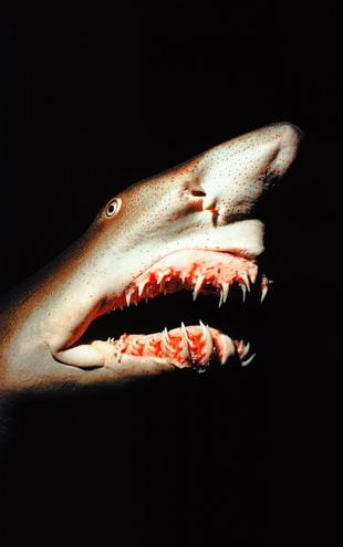 PHOTOWALL / Shark (e6339)