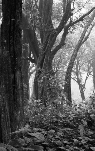 PHOTOWALL / Tropical Forest - b/w (e6342)