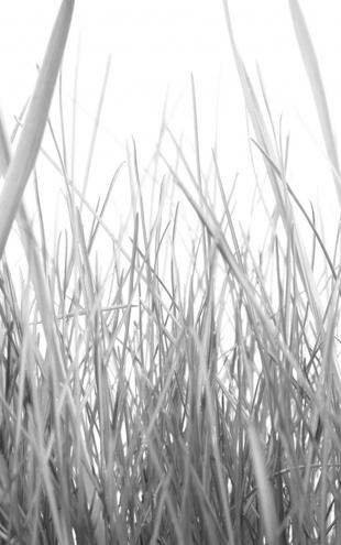PHOTOWALL / High Grass - b/w (e10002)