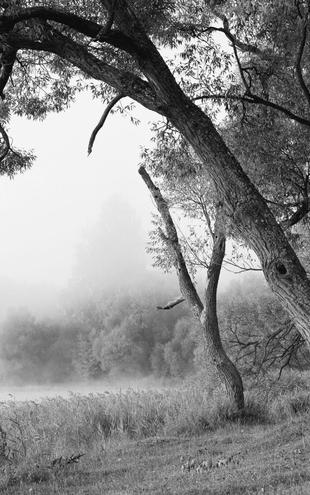 PHOTOWALL / Tree in a Fog - b/w (e10078)