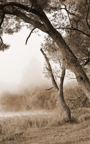 PHOTOWALL / Tree in a Fog - Sepia (e10079)