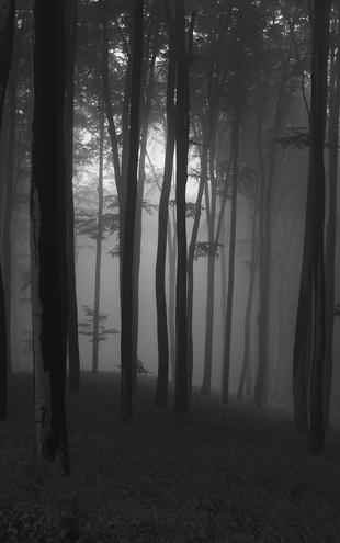 PHOTOWALL / Mystical Forest - b/w (e1402)