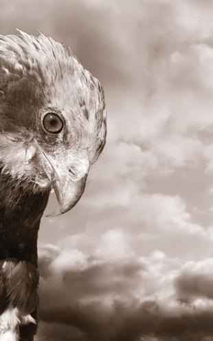 PHOTOWALL / Eagle - Sepia (e1424)