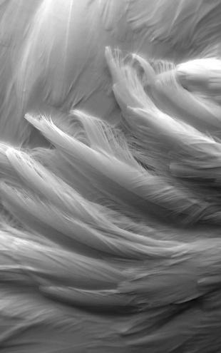 PHOTOWALL / Feather (e1456)