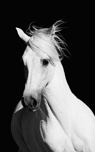 PHOTOWALL / High Contrast Horse (e1482)