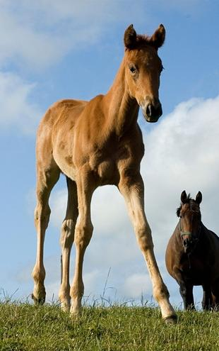 PHOTOWALL / Young Foal (e1502)